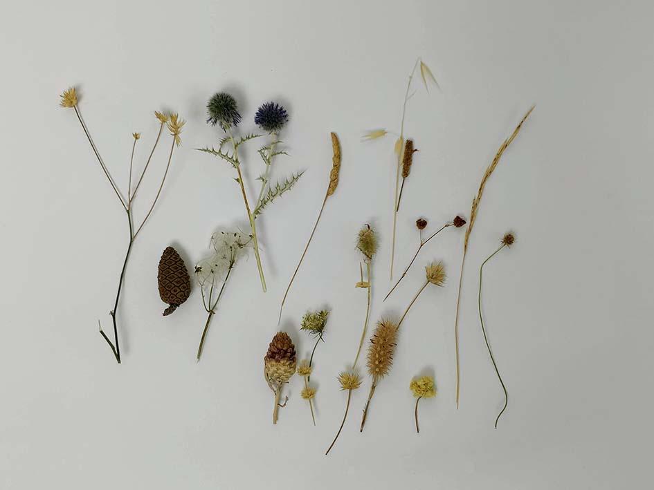 cadre vacances à Gordes : herbes